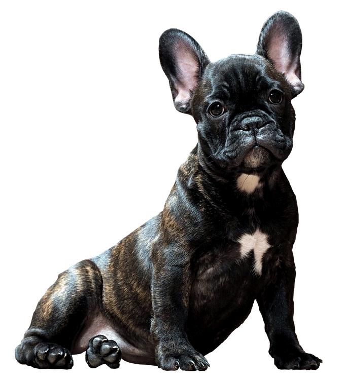 hund-klein-nassfutter-snacks-min