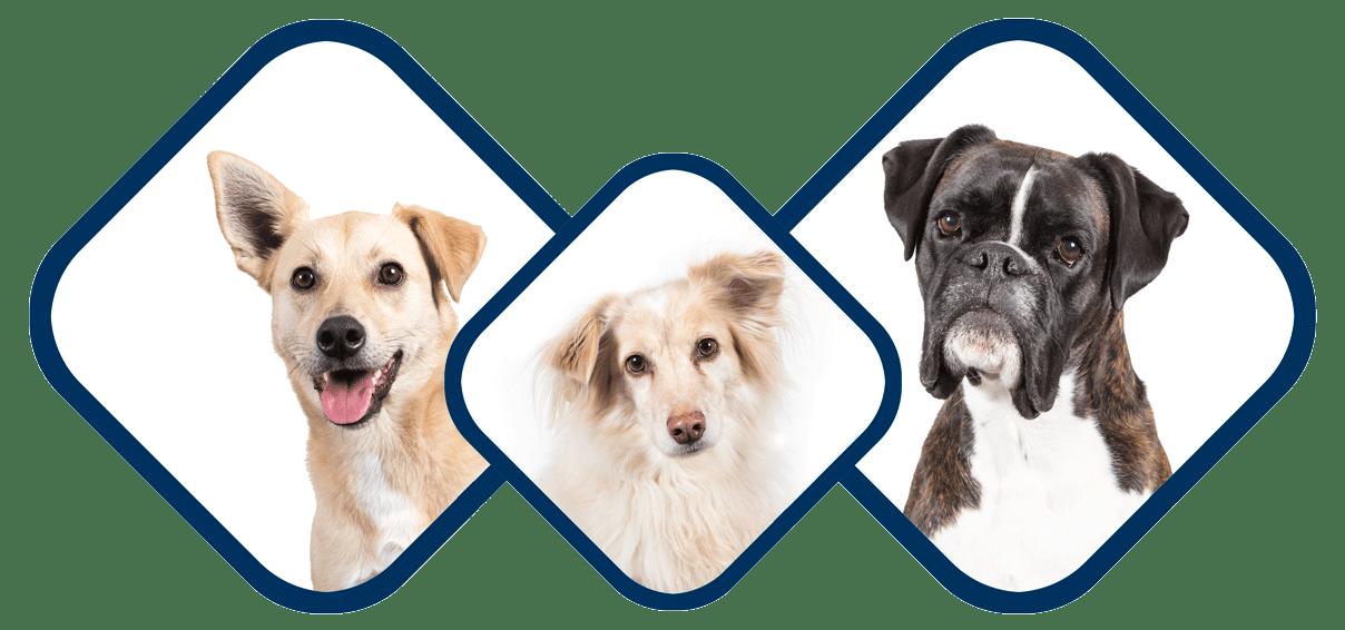 hunde-petsolut-testimonials-min
